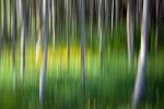 Wood motion