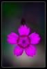 Steenanjer, Dianthus deltoides