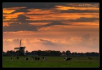 Koningslaagte - Groningen